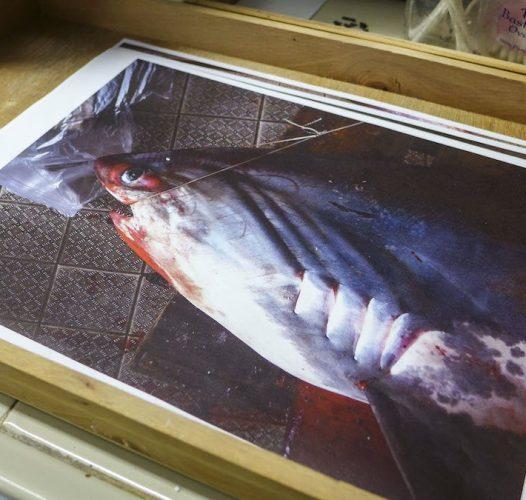 Lo squalo bianco a Venezia: i segreti del suo ritorno